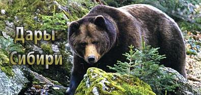 Дары Сибири. Природные лекарства. Народная медицина. Медвежья желчь, панты марала, кровь марала, мускус кабарги.